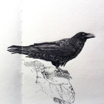 Raven - Grey and Black Ink