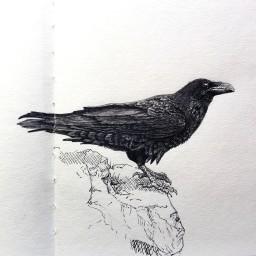 Raven - Grey and Black Ink